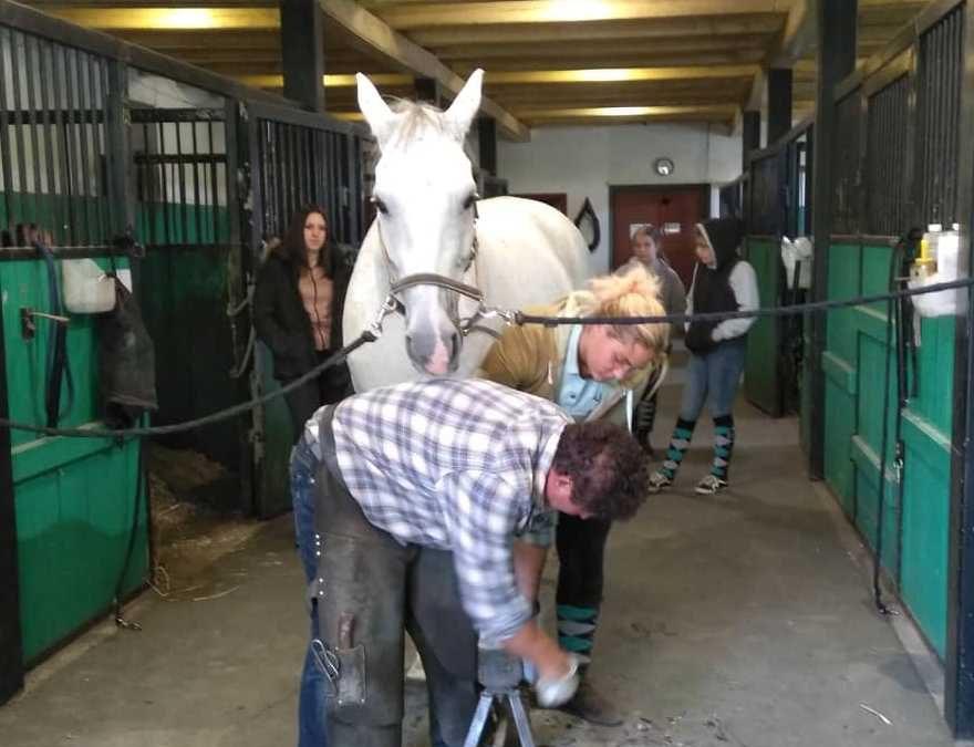 A patkoló kovács munkáját is segíteniük kell azoknak, akik lovászok szeretnének lenni.